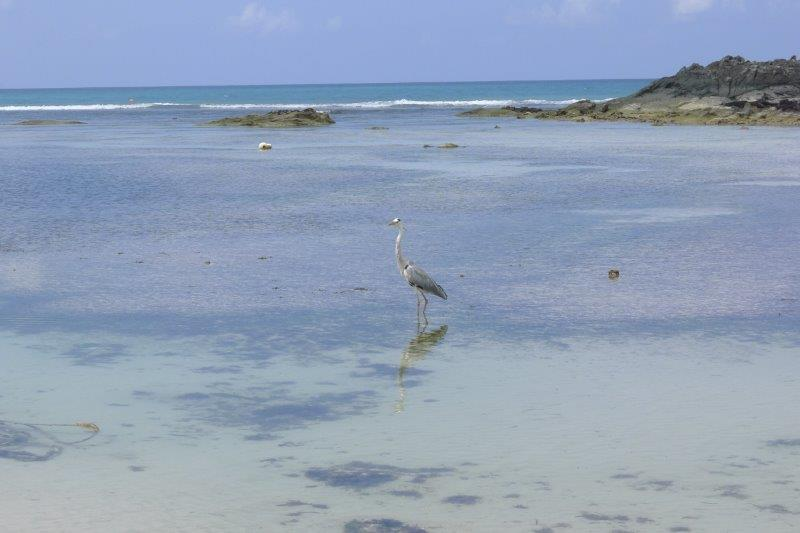 Bird on the beach