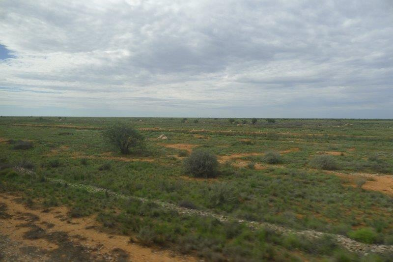 nullarbor plain green