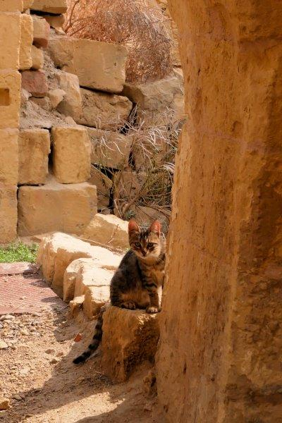 Malta cat peeking around corner