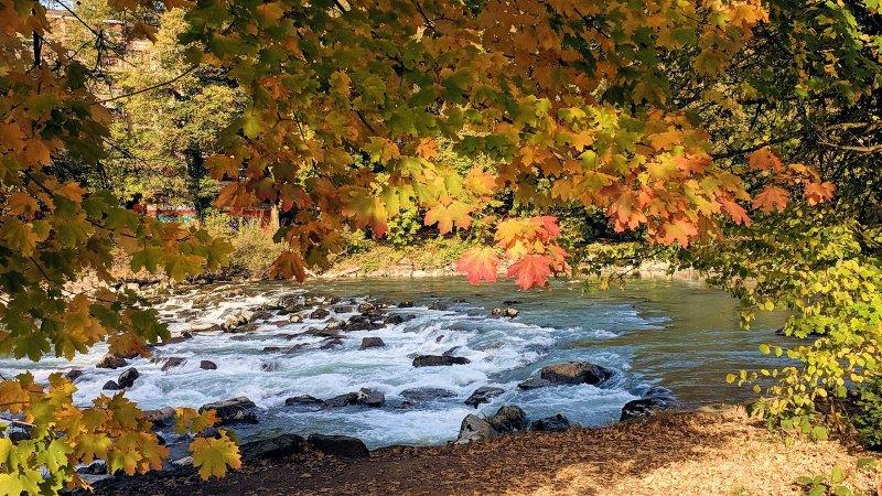 Fall leaves and the river